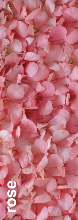 peelable-Rose